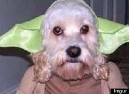 15 Adorable Animals Dressed Up In 'Star Wars' Costumes