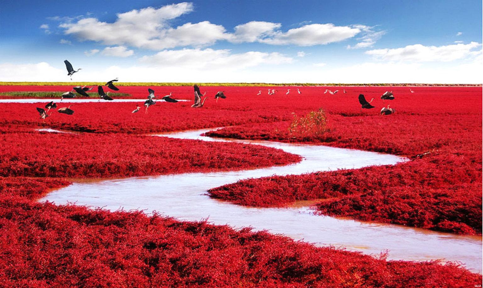 نتيجة بحث الصور عن تواجد شاطئ في الصين، وهو يعتبر من أغرب الظواهر الطبيعية
