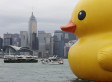 World Photo Caption Contest: Giant Rubber Duck In Hong Kong