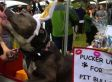 Pit Bull Kissing Booth Will Make You Want To Pucker Up (PHOTOS)