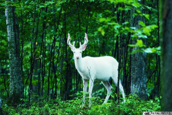 private life of deer