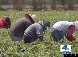 Farmworkers Fired California Wildfire