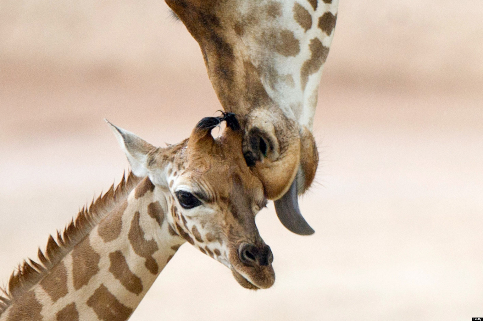 50 Ridiculously Cute Animal Babies And Moms
