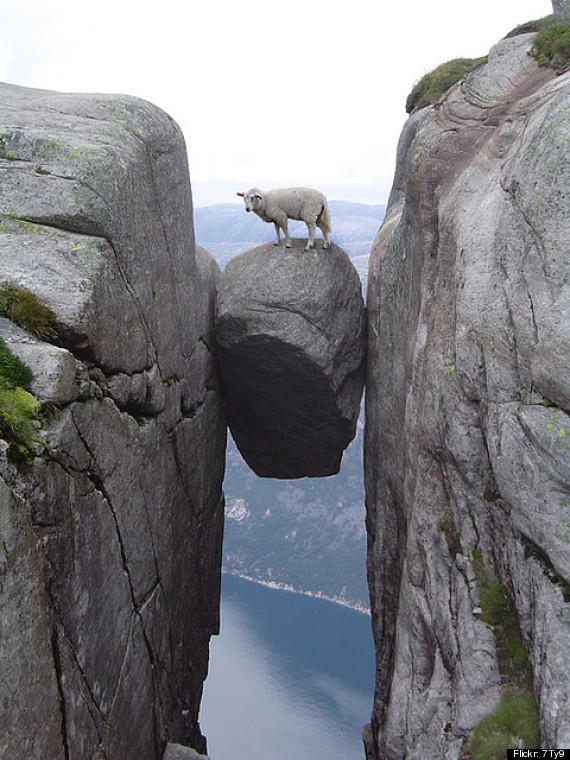 sheep boulder