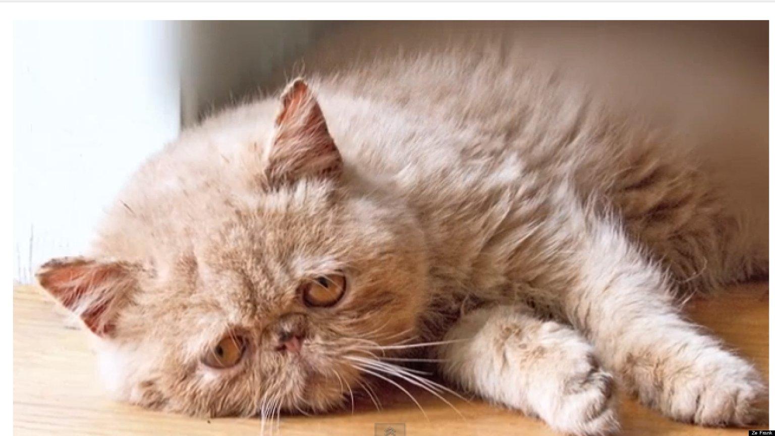 Youtube Ze Frank Sad Cat Diary