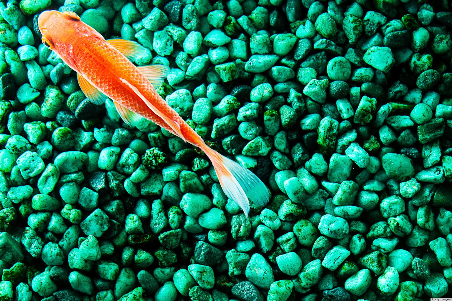 how to clean white aquarium gravel