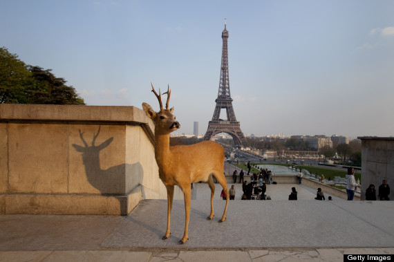 deer sightseeing photos