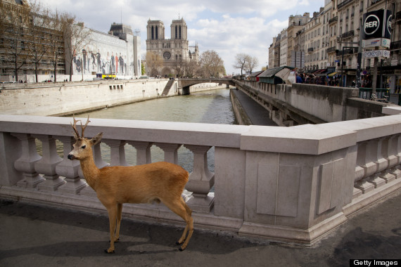 deer sightseeing paris