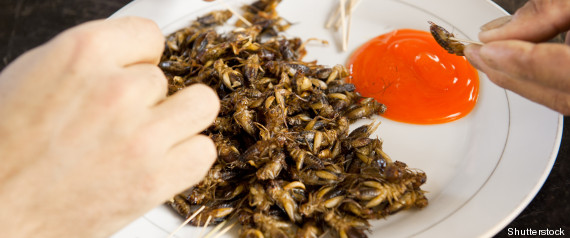 ONU ALIMENTATION INSECTES