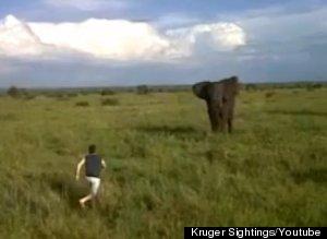 Tourist Charges Elephant