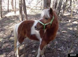 These Horses Need New Homes! The Pot-Bellied Pig, Too