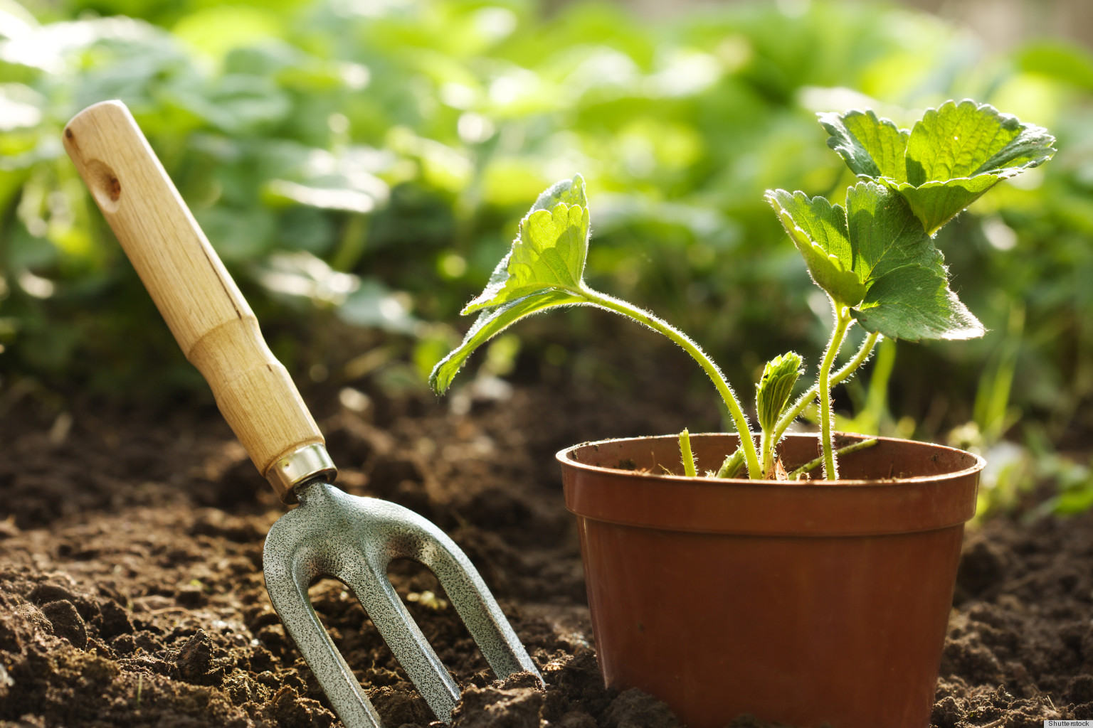 The best gardening tools huffpost for Best gardening equipment