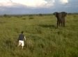 Drunk Man Charges Elephant, Lives For Some Reason (VIDEO)