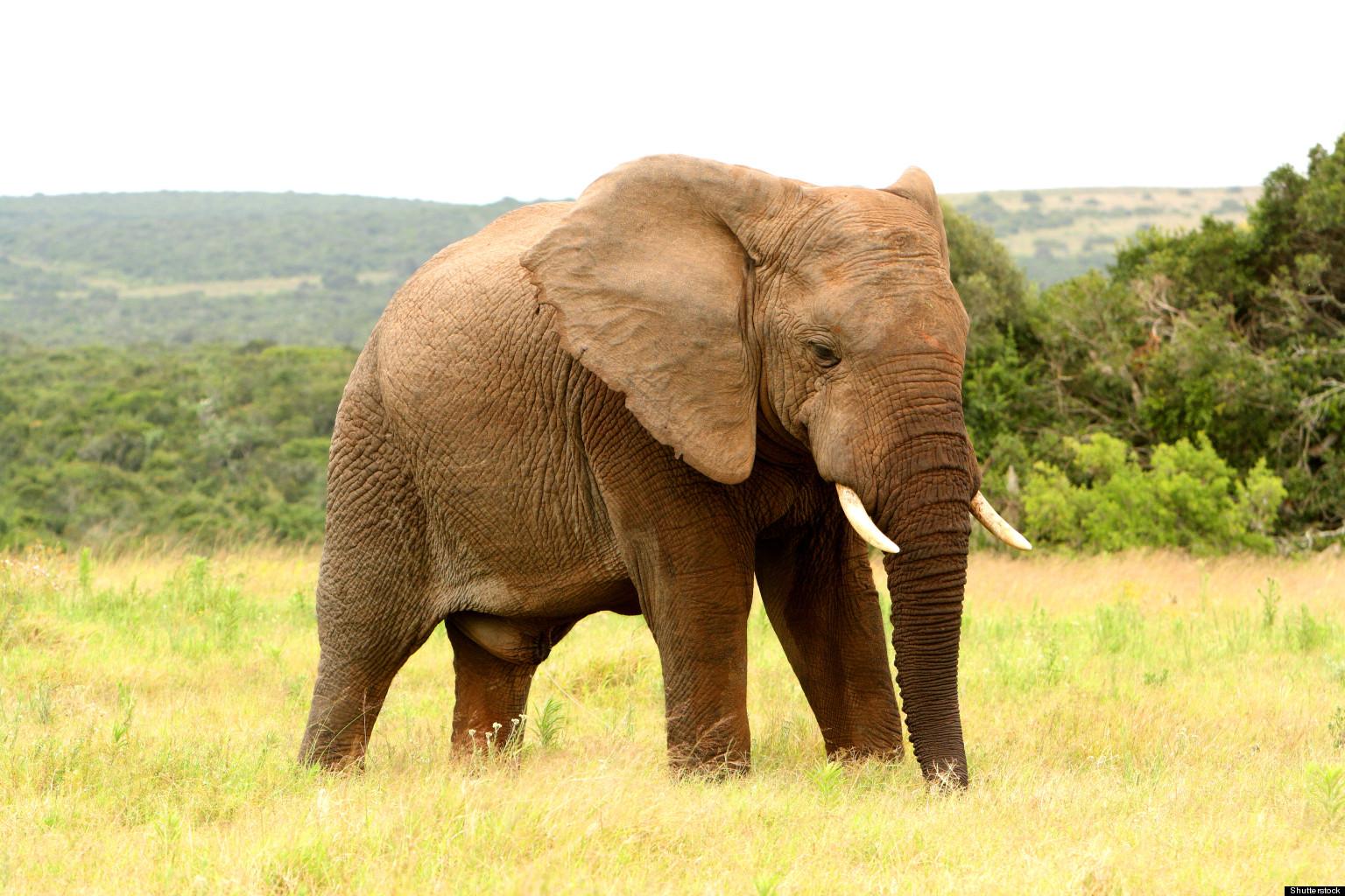 Elephant Gets Ultimate Revenge On Poacher