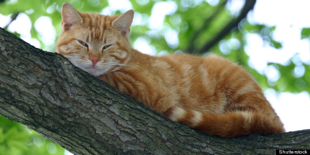 [Image: h-CAT-IN-A-TREE-628x314.jpg]