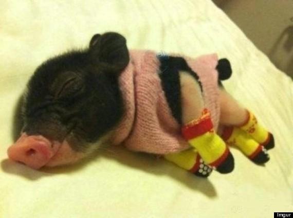 piggy13