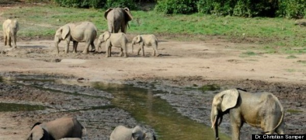Elephants in Jeopardy in Central African Republic