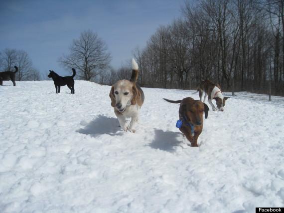 badass brooklyn dachshund