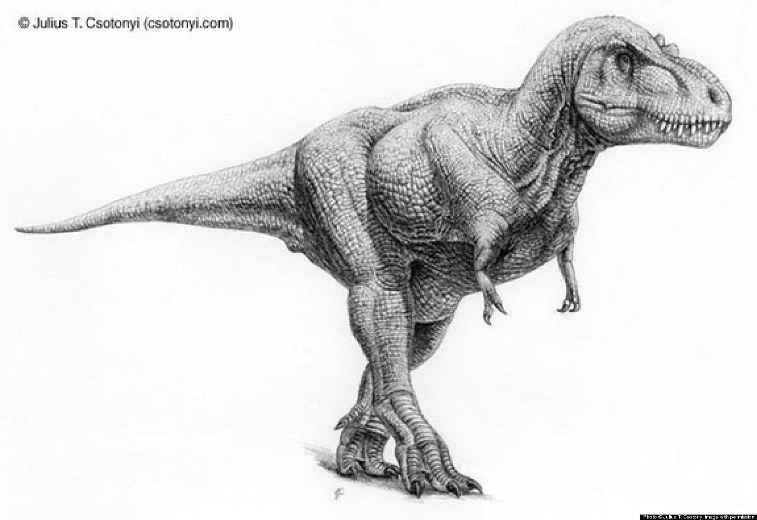 Drawing dinosaurs anatomy and sketching