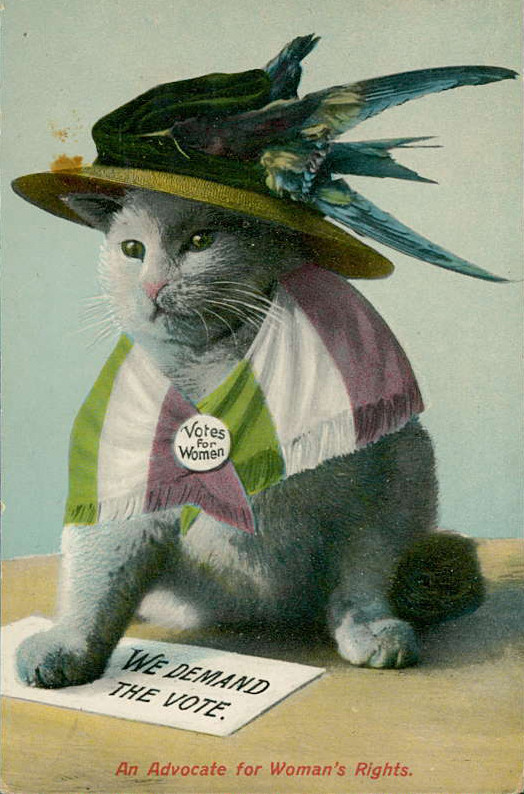 Science Memes Cat Cat Memes From The Suffrage