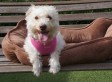 Janie, The Dog With A Broken Back, Is Proof That Miracles Can Happen (VIDEO, PHOTOS)