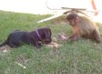 Monkey Shares Lollipop With Puppy Because Animals Love Candy (VIDEO)