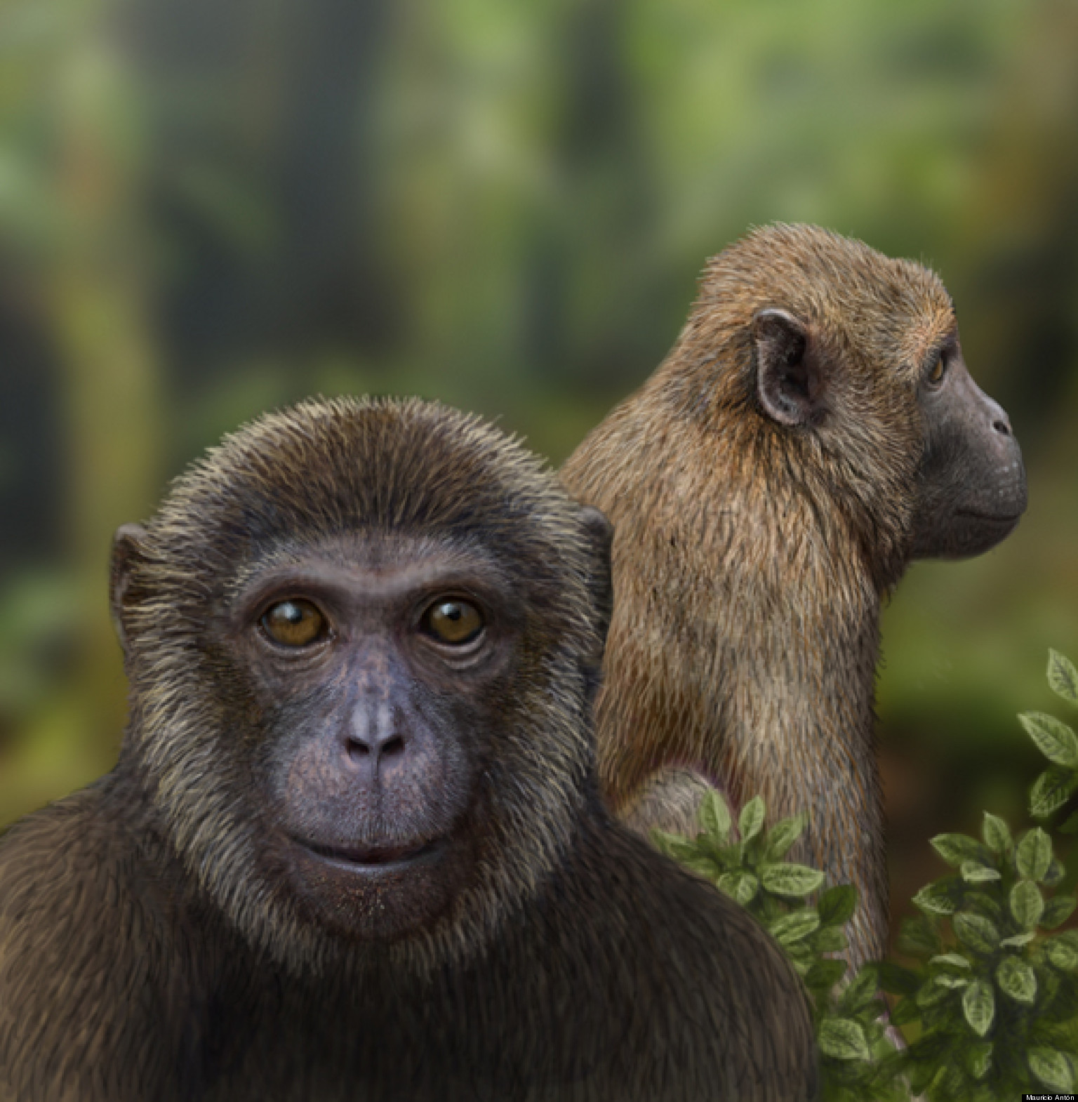 MONKEY NEWS - Capuchins Primates Incorporated