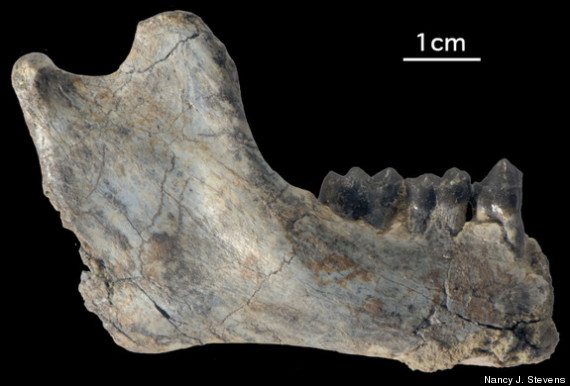 oldest ape fossils