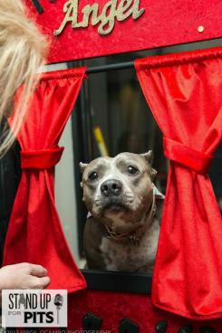pit bull kissing booth