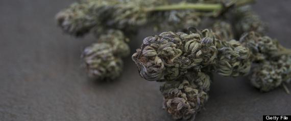 Washington state medical marijuana availability could jinx