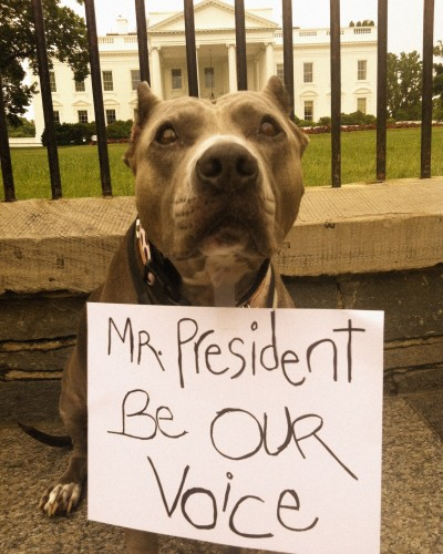 one million pibble march