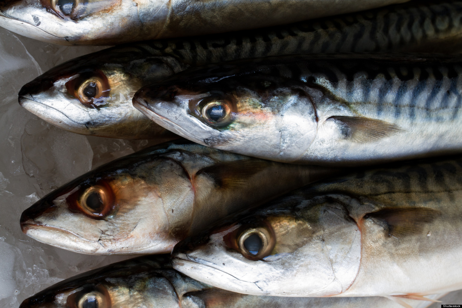 Updated Mercury In Fish Advice Stalled In Health