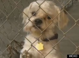 Castro's Pets Seized From House Of Horrors