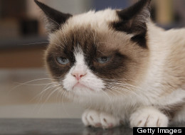 Cheer Up Grumpy Cat, You Just Got A Movie Deal!
