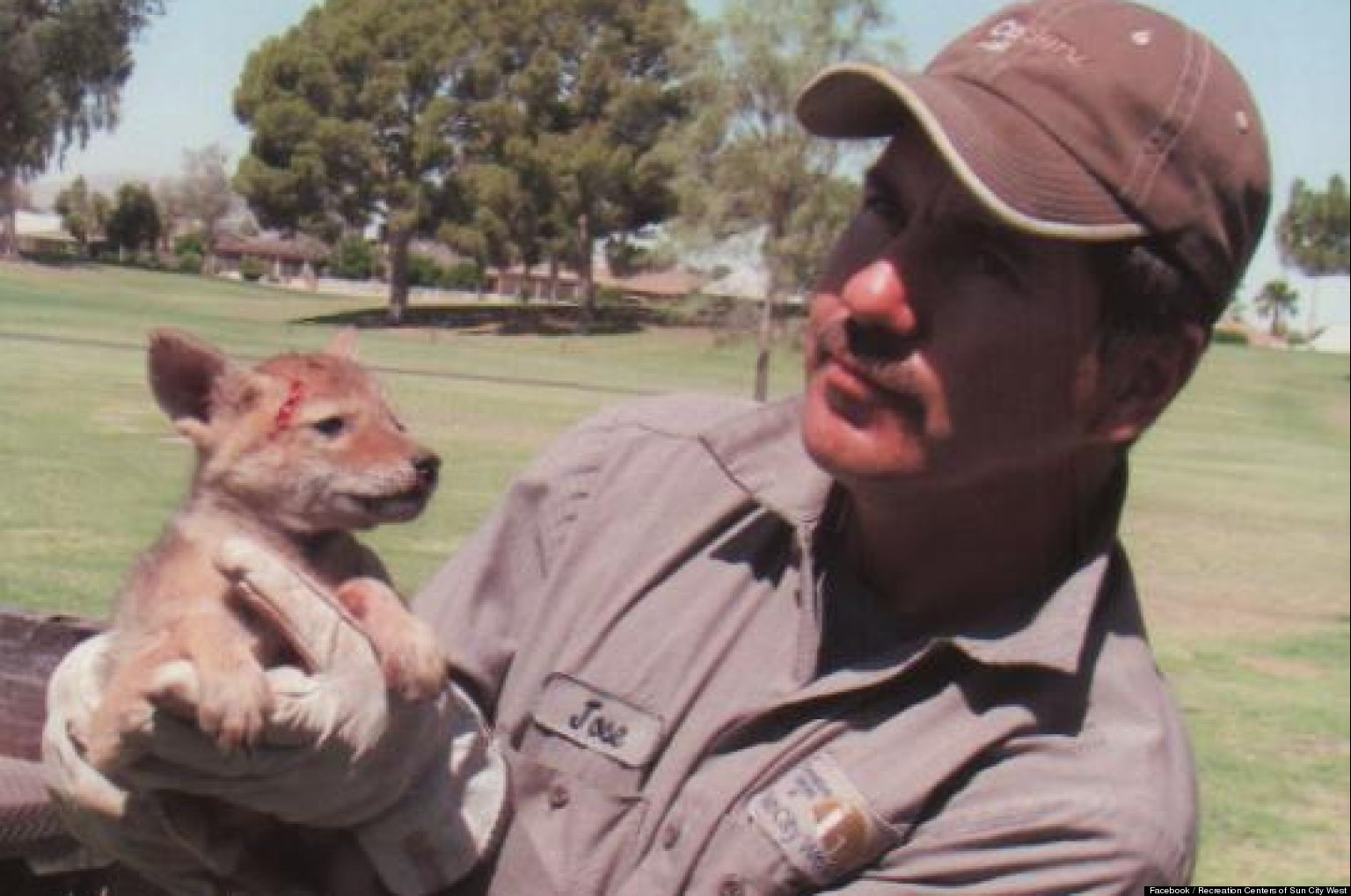 Arizona Golf Course Workers Save Coyote Puppy Covered In