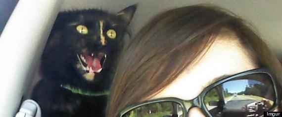 CAT PHOTOBOMBS