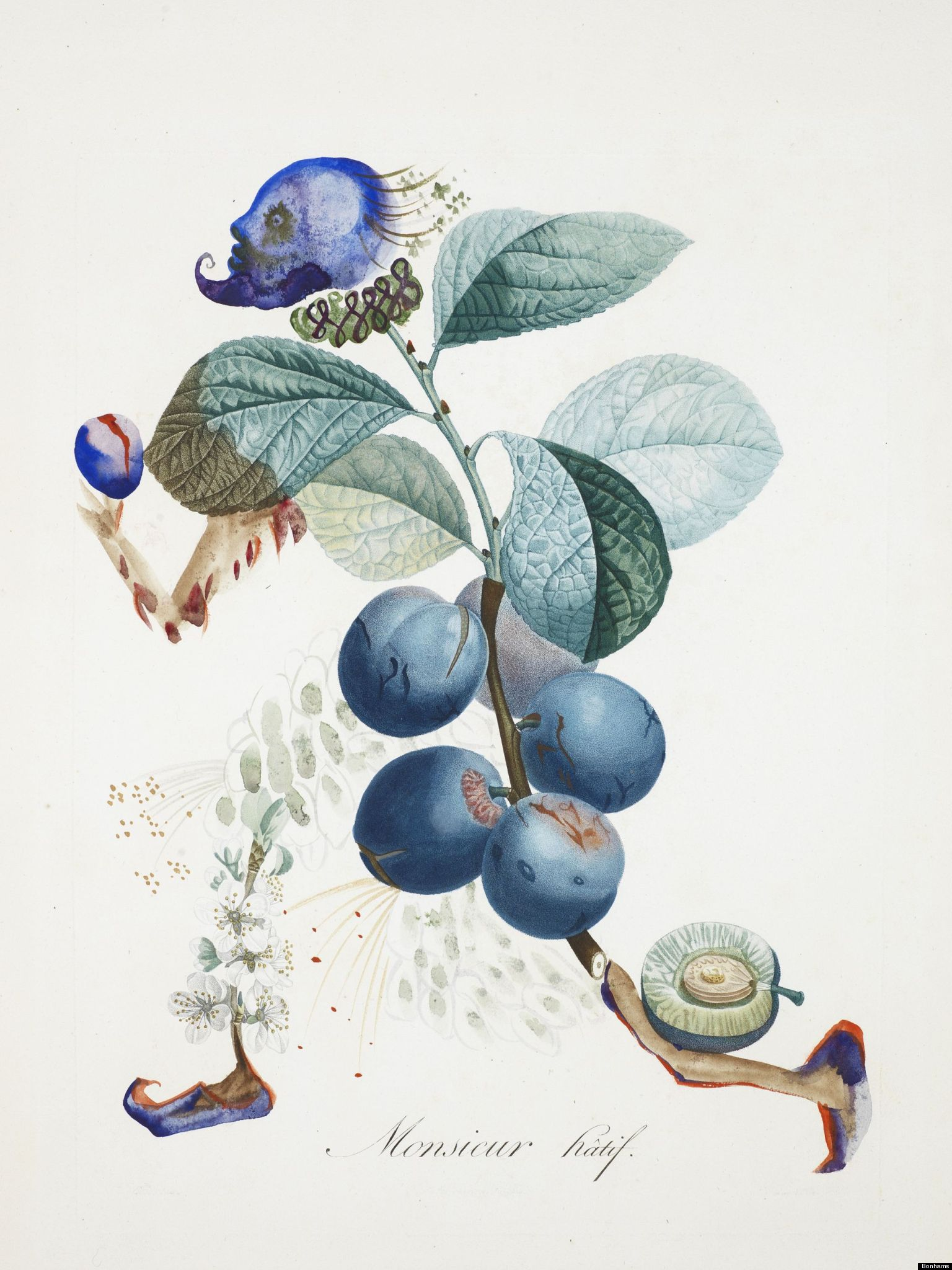 Dali Auction: Hidden Botanical Watercolors Head To Bonham ... | 1536 x 2048 jpeg 310kB