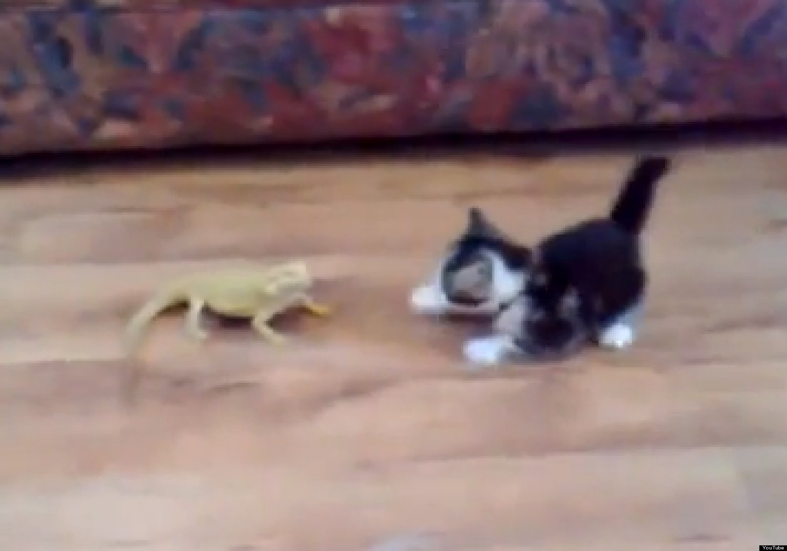 WATCH: Kitten Takes On 2 Lizards