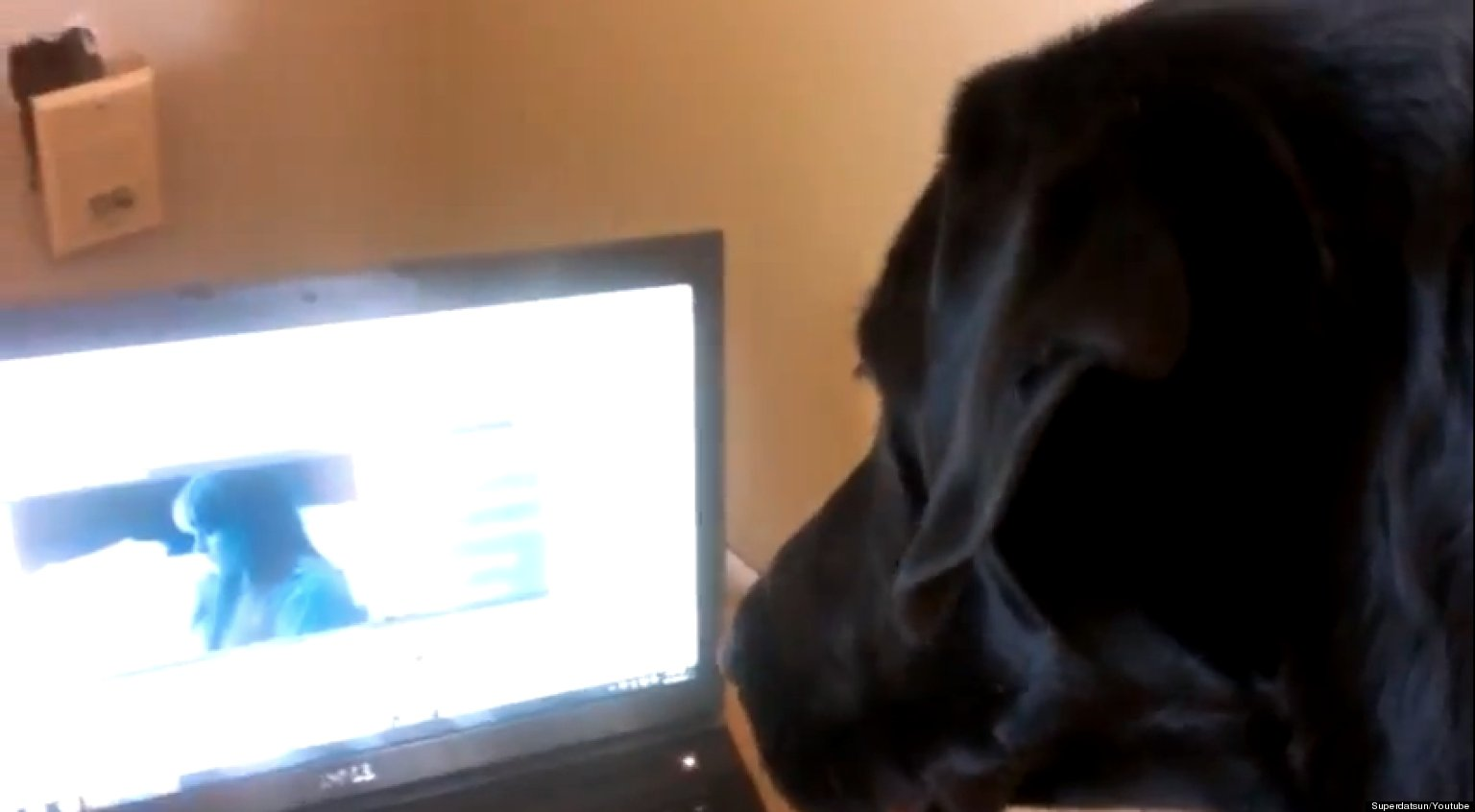 WATCH: Labrador Sings Along To His Favorite Song