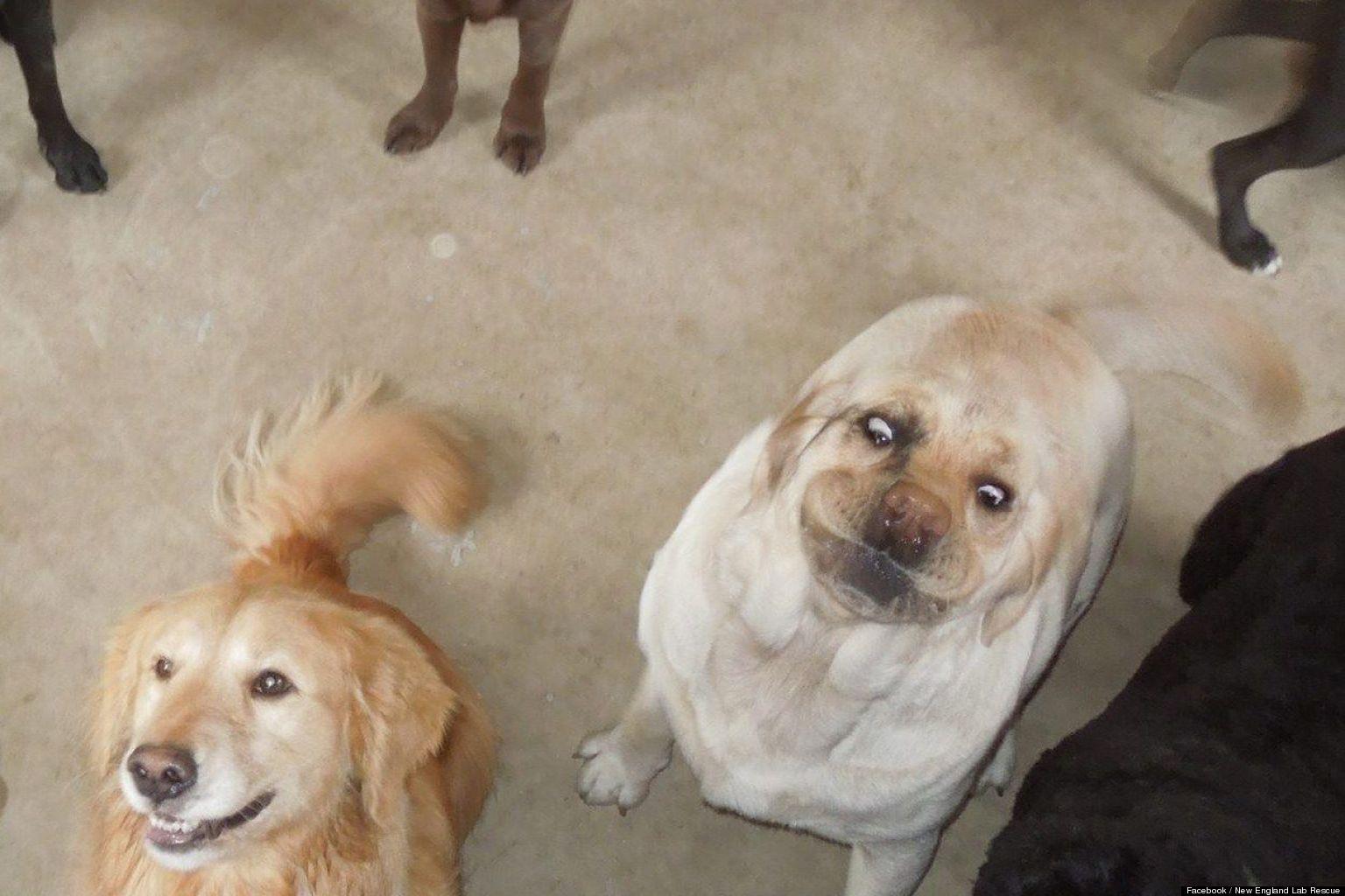 LOOK: Reddit's New Favorite Dog Is A 'Labra-derp'