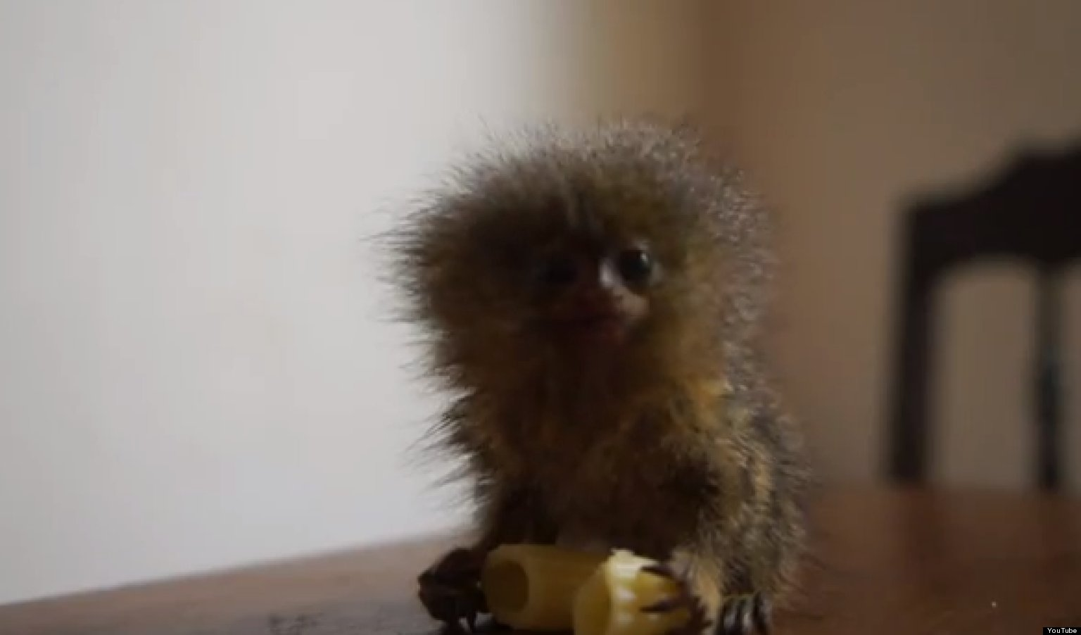 Tiny Monkey Is Tiny