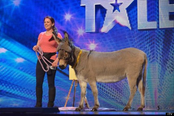 britains got talent donkey