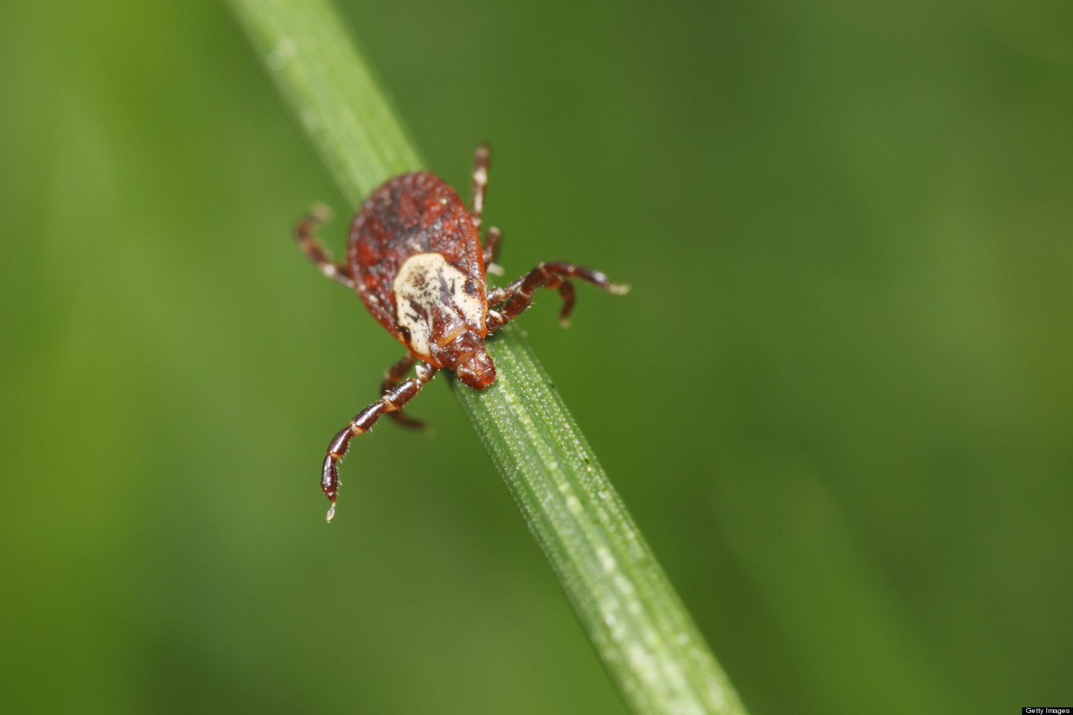 the lyme disease Lyme disease is an illness caused by the organism borrelia burgdorferi, a  bacterium known as a spirochete that is carried by a deer tick the spirochete can  be.