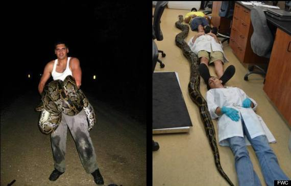 james leon python