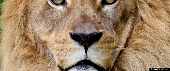 Lion Meat  San Francis...