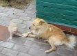 Kitten Bullies Patient Dog To Its Limit (VIDEO)