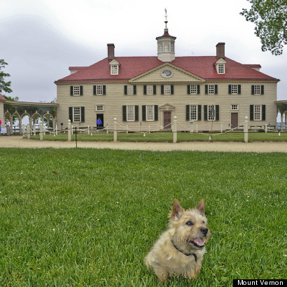 mount vernon dogs