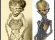 Search Begins For 6-Inch Alien's Earthling Cousin