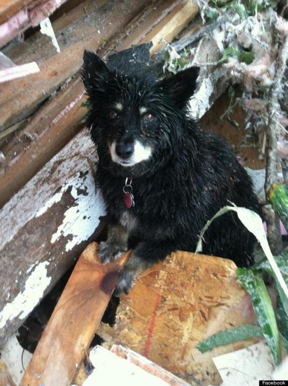 dog guards owner tornado