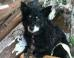 Dog Guards Dead Owner's Body After Oklahoma Tornado Disaster (PHOTO) (UPDATE)
